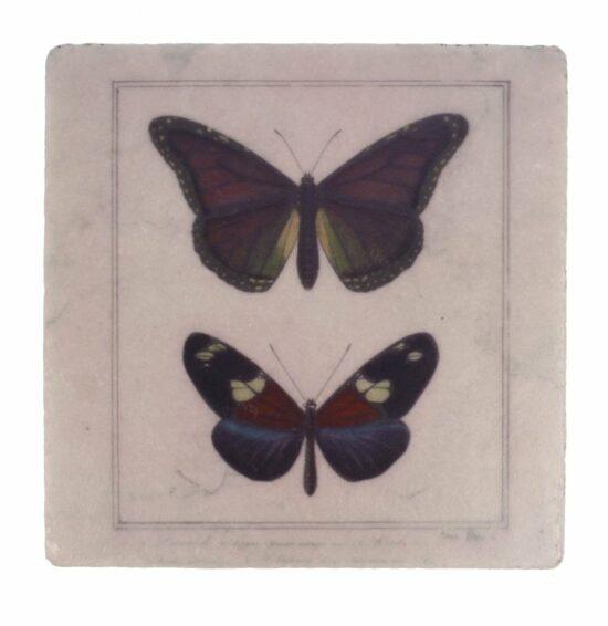 Onderzetter Vlinders