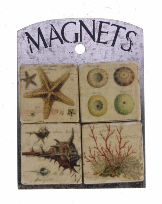 Magneetjes Schelp-Koraal