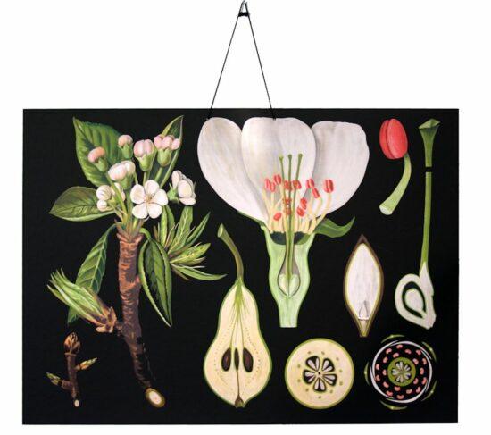 Wandplaat Botanisch Perenbloesem