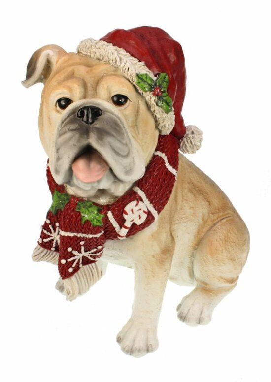Bulldog met Kerstoutfit