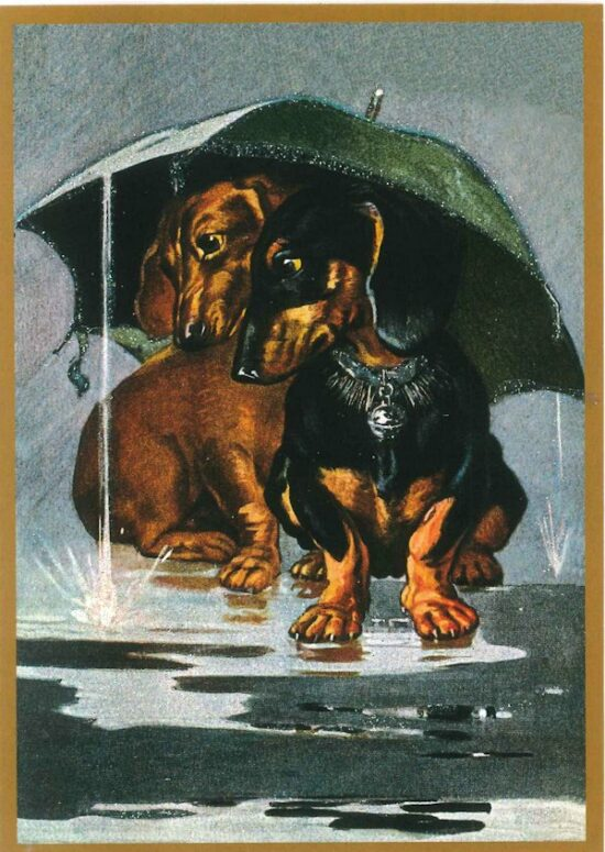 Ansichtkaart teckels onder paraplu