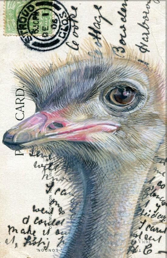 Wenskaart  met envelop Struisvogel