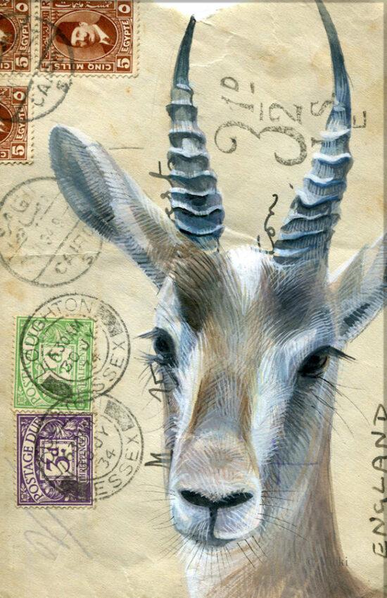 Wenskaart  met envelop Antilope