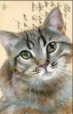 Wenskaart cyperse Kat met envelop