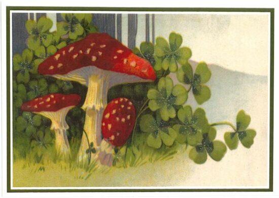 Ansichtkaart paddenstoelen