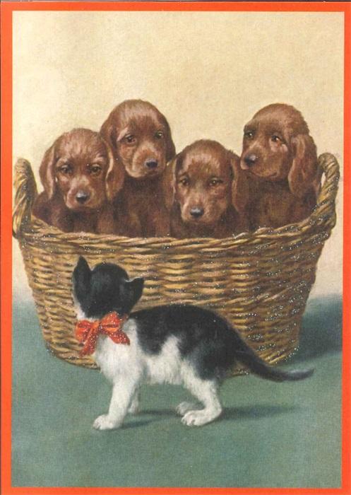 Ansichtkaart puppies in mand